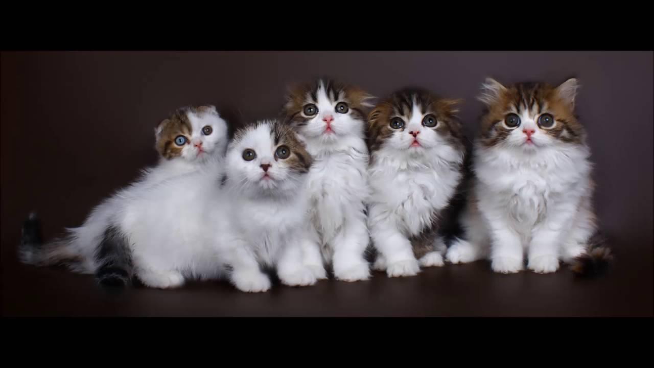 Бенгальские котята Москва - YouTube