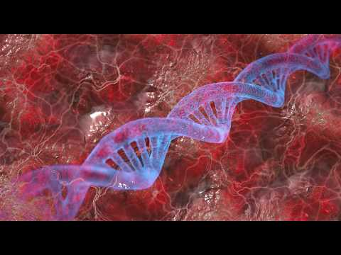 La Basmala Et Les 23 Chromosomes Humains - Les Miracles Du Coran