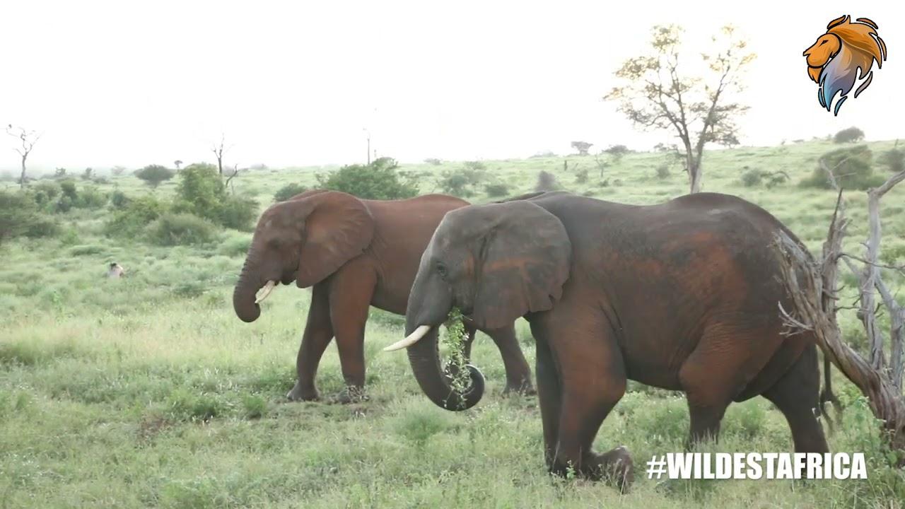Kruger Park Wildlife Safari Game Drive Highlights.