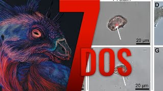 Traces of Dinosaur DNA(?) & Photoluminescent Dinosaurs - 7 Days of Science