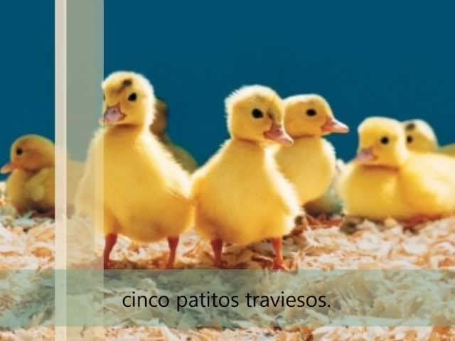 Cinco patitos traviesos- L.Vinelli Videos De Viajes