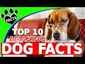 TopTenz: Top 10 Amazing Facts About Dogs 101 - Animal Facts