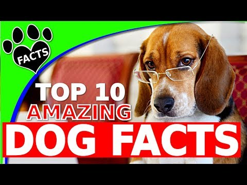 Top 10 Amazing Facts About Dogs 101 - Animal Facts