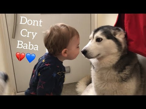 The Only Way To Stop My Baby Crying Is Bringing In The Huskies!
