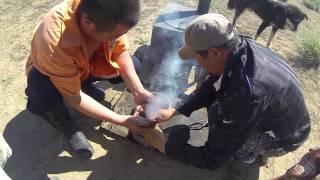 Video Mongolia - Marmot For Lunch download MP3, 3GP, MP4, WEBM, AVI, FLV Juni 2018