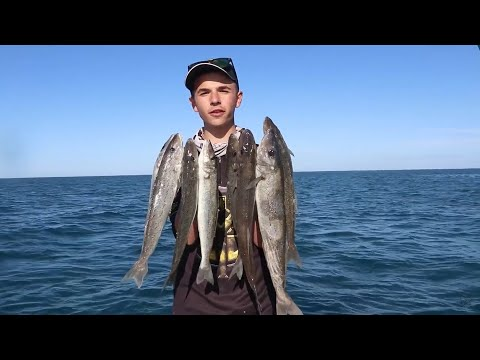 MONSTER WHITING ON THE YORKES! | South Australian Fishing!
