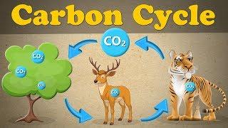 The Carbon Cycle #aumsum