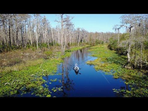 Okefenokee Swamp Trip 2017