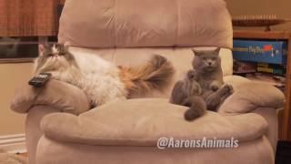 Прикольные смешные кошки