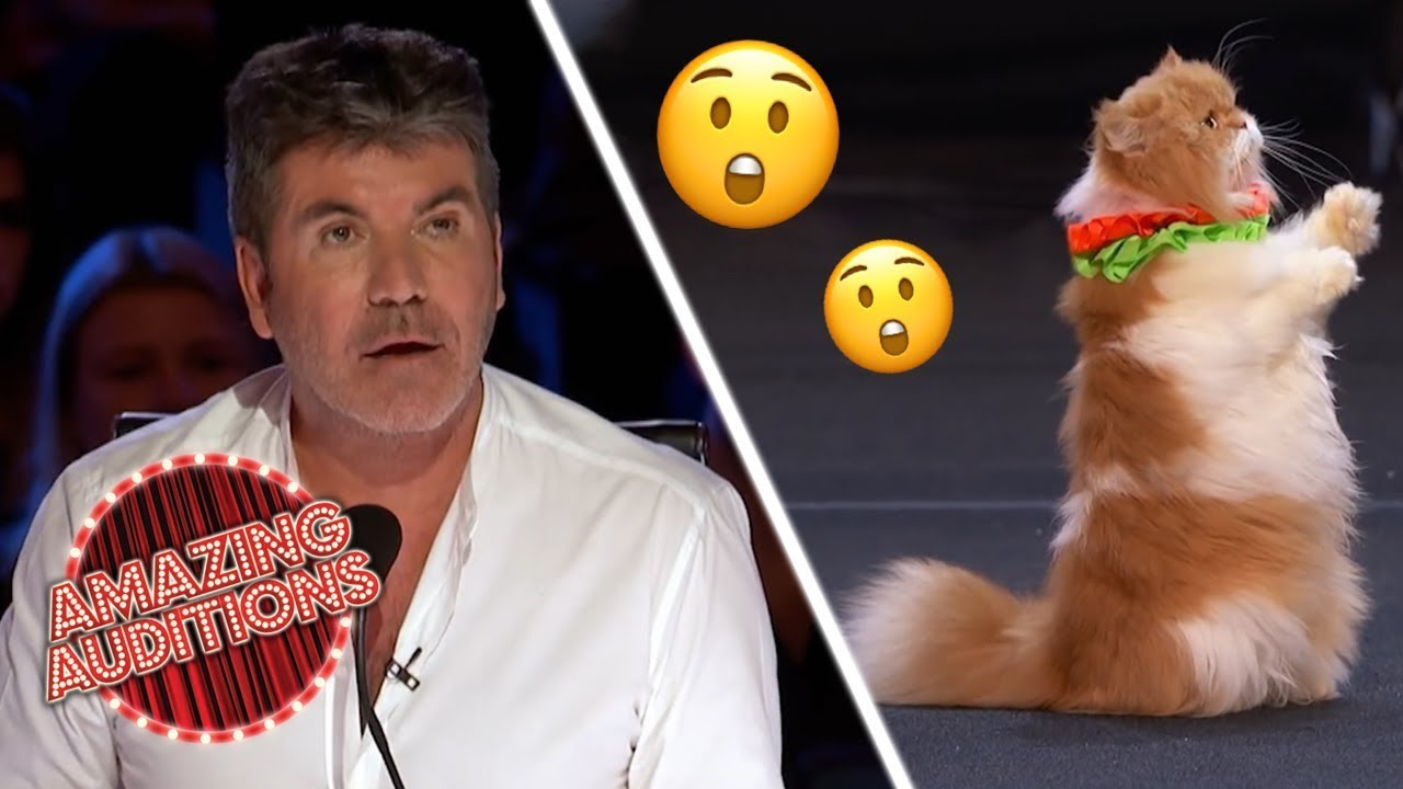 CATS! TALENTED Cats On America's Got Talent Are FELINE Good! | Amazing Auditions