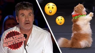 CATS! TALENTED Cats On America's Got Talent Are FELINE Good!   Amazing Auditions