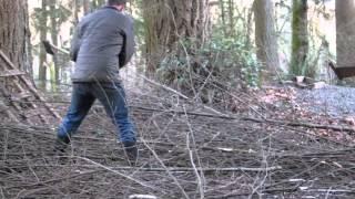 Axe Chopping Alder Trees