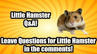 Little Hamster Q&A (LEAVE QUESTIONS IN COMMENTS)!!