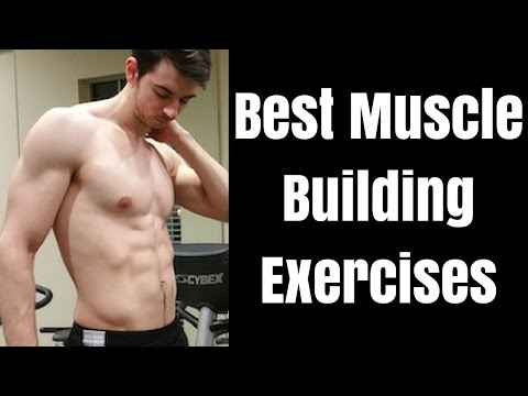 Best Muscle Building Exercise for Each Body Part to Maximize Gains