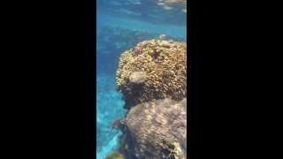 1308.00059 Coral Reef Thumbnail