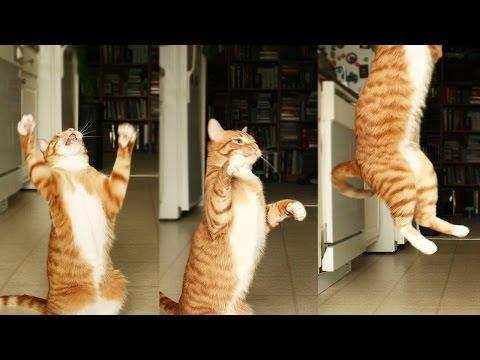 Dancing Cats!