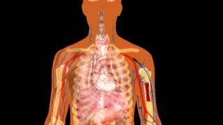 The Human Body | Brain Lungs And Heart | Human Body Parts | Science Interesting | Biology Articles |