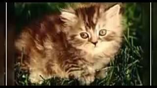 Милые котята и щенки часть 2.  Малыши котята в этом видео порозят вас!