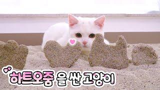 고양이 감자 버리기 아깝지 않아요?? 장식품을 만들어 봅시다!!   고양이산책