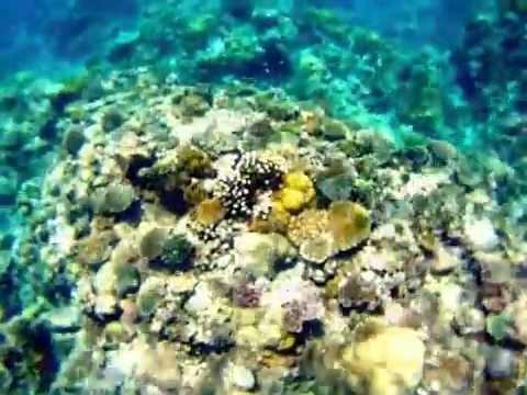 Snorkeling in Comoros