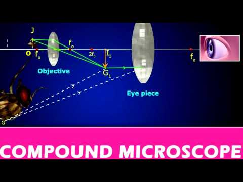 CLASS XII _Compound Microscope  1