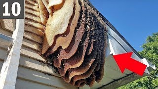 10 Worst Bug Infested Houses