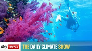 The Daily Climate Show: Australia hits back at Great Barrier Reef protection plan