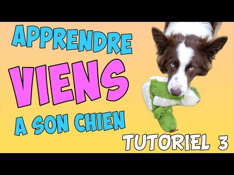Collier Aboiement - 10 astuces à savoir - Education canine - Comment y arriver ?
