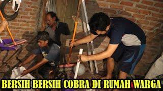 RESCUE COBRA NYASAR MASUK RUMAH TETANGGA