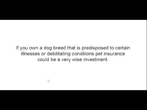 Cheap Pet Insurance For Your Dog-866-705-2204