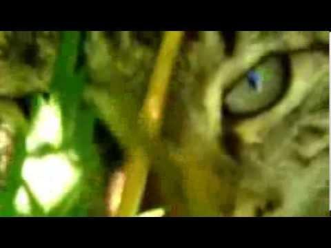 Мякиш (#кот) + #конопля (#сорная) + #дабстэп (#ликвид) = Кот гуляет по двору, ищет приключения и еду