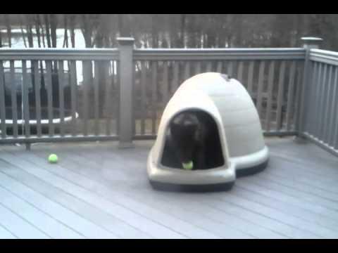 Tsumi \u0026 Kenzie in the dogloo house! & Tsumi \u0026 Kenzie in the dogloo house! - YouTube