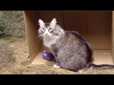 Road of Life cat music video