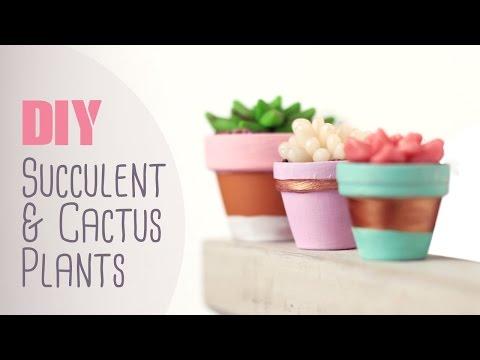 DIY: Succulent & Cactus Plants | Cute & Happy Home Decor Ideas