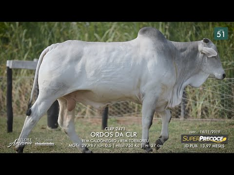 LOTE 51 - CLRP 2471
