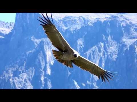 Volvemos al Refugio NUCLEAR | 60 Segundos de YouTube · Duración:  21 minutos 10 segundos