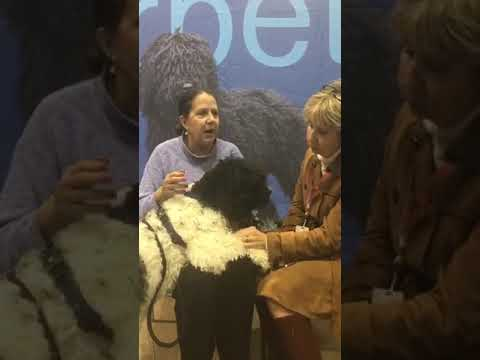 Barbet Interview at the AKC National Championship 2018