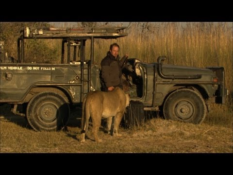 Lion sniffs cameraman's crotch | Crazy Cameraman Ep7