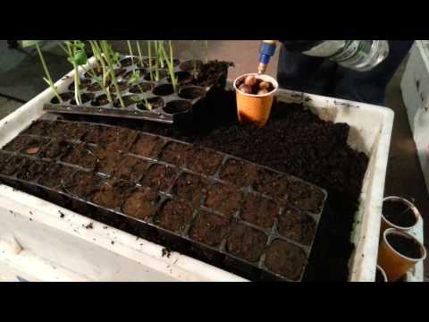 Разведение дождевых червей в домашних условиях - Неделя 10