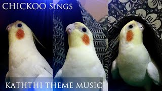 My Cocktail Bird Sings Kaththi Theme Music -Chickoo The Bird|Even My Pet Is A Die Hard Vijay Fan😍