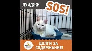 Луиджи - глухой котёнок