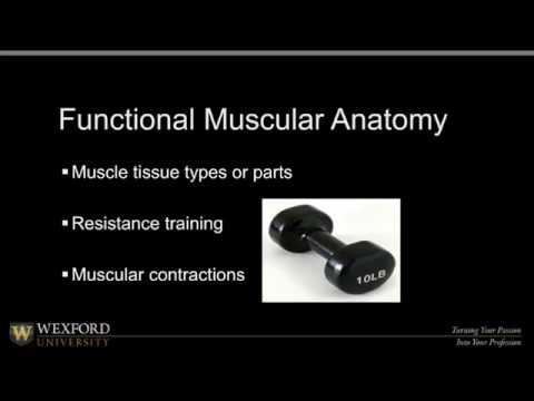 Physical Wellness  Part 2 |  Education for Health and Fitness Professionals