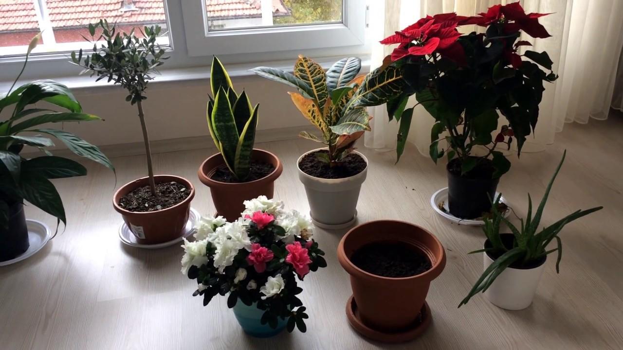 Saksıda çiçek Ve Bitki Yetiştiriciliği Youtube