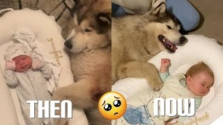 Giant Dog Promised To Always Protect My Baby!! (Cutest Video EVER!!)