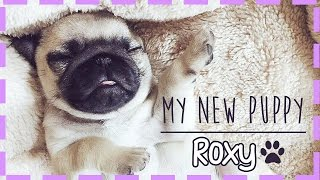 MEET MY NEW PUPPY!