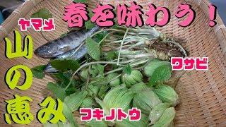 春の足音が近づく3月! 島根県津和野町の山奥で山菜採りをして来ました...