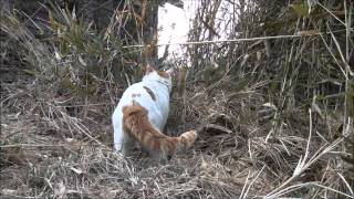 http://kagonekoshiro.blog86.fc2.com/blog-entry-4252.html かご猫Bl...