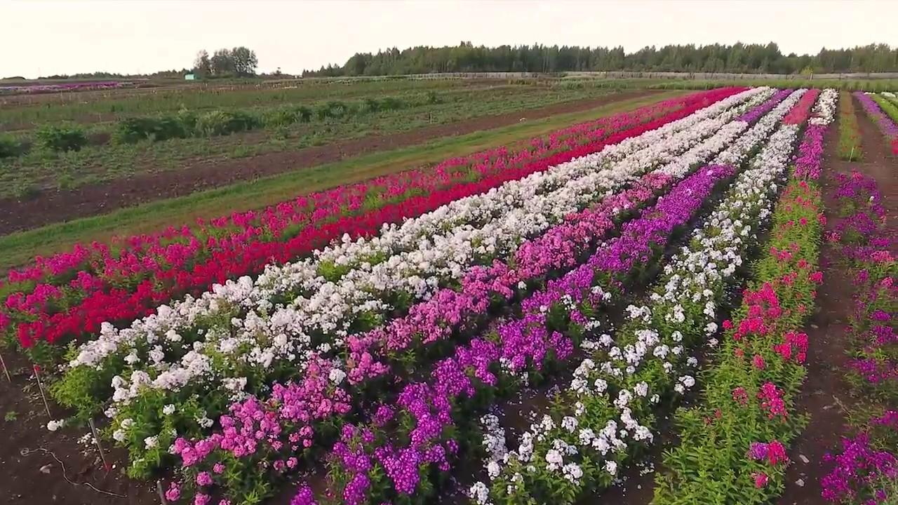 Самые редкие растения России