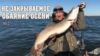 Незакрываемый спиннинговый сезон Осень Спиннинг Рыбалка в Казахстане