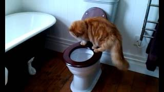 Kitten is obsessed with the toilet